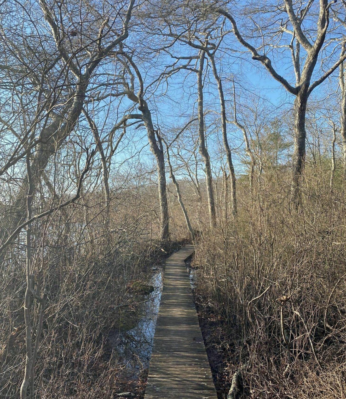 Big Woods Preserve